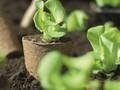V únoru začneme připravovat zahradu na jaro