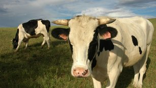Historie obchodu: Od krávy k bitcoinu