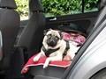 V přepravním boxu si může pes lépe odpočinout