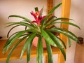 Rostliny jsou součástí interiérů již po mnoho staletí
